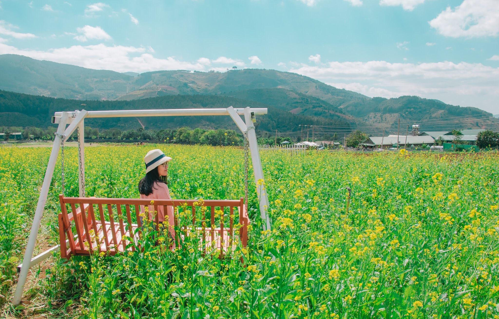balancelle dans un champs en montagne