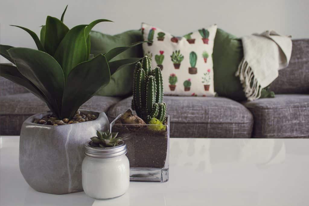 salon table basse avec plante